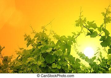 Grapevine over sunset sky