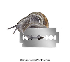 Grapevine snail and razor blade - studio photography of a ...