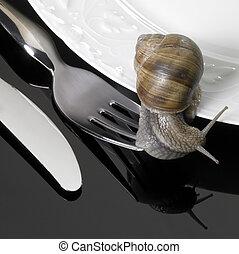 grapevine snail creeping on dinnerware