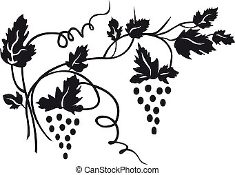 The white image of a grapevine with grapes clusters is black.