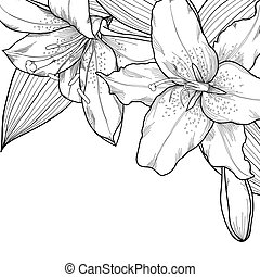 graphic black and white lilies. Decoration on a white...