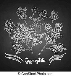Graphic gypsophila set. Vector floral decorations isolated ...
