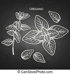 Graphic oregano set