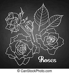 Graphic roses collection