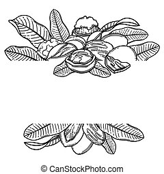 Graphic shea nuts and leaves. Vector design - Graphic shea ...