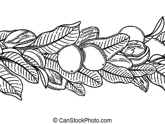 Graphic shea nuts and leaves. Vector repeated border - ...