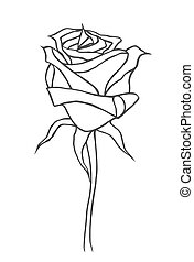 Drawing vector graphics - Graphic, sketch drawing. Rose,...