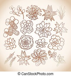 Graphic succulent collection - Graphic isolated succulent...