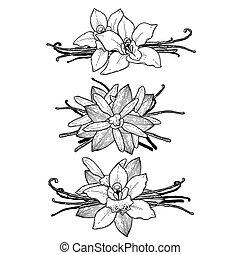 Graphic vanilla vignette - Graphic vanilla flowers...
