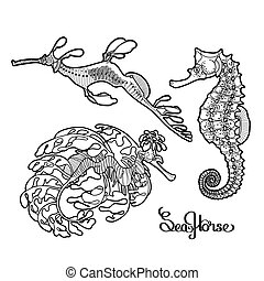 Graphic vector Seahorse collection drawn in a line art style. Ocean creatures isolated on white background. Coloring book page design