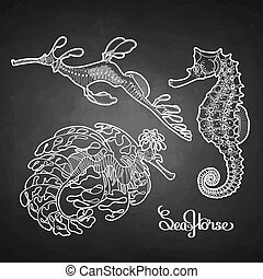Graphic vector Seahorse collection in a line art style. Ocean creatures isolated on chalkboard