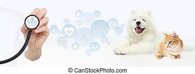 graphique, concept., vétérinaire, chien, isolé, symboles, chat, fond, blanc, main, stéthoscope, soin