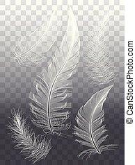 graphique, ensemble, plumes, vecteur, conception, blanc