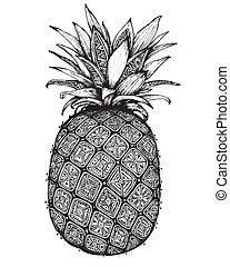 graphique, fruit., ananas, main, orné, dessiné