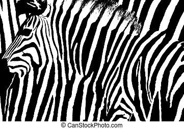 graphique, mélangé, résumé, raies, arrière-plan., conception, zebra, sien
