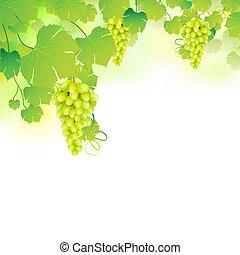 grapvine, druiven