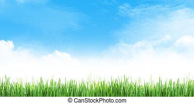 gras, achtergrond, abstract, zomer, akker, hemel, breed