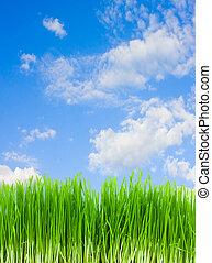 gras, blauw groen, hemel
