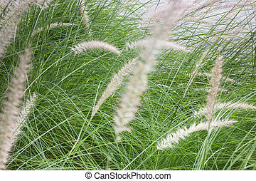 gras, bloem, achtergrond, in, natuur