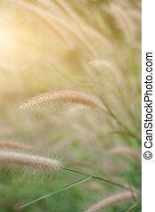 gras, blume, auf, der, wiese, an, sonnenlicht, natur, hintergrund, fruehjahr