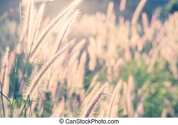 gras, blume, sonnenlicht, morgen