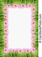 gras, en, madeliefje, achtergrond