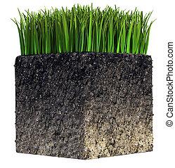 gras, en, terrein