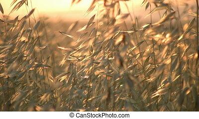 gras, en, zomer