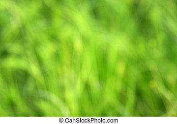 gras, grün, Fokus, hintergrund, heraus