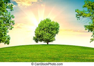gras, grüne bäume