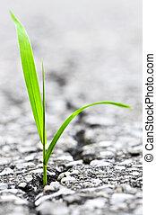 gras, groeiende, van, barst, in, asfalt