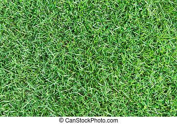 gras, groene achtergrond, natuur