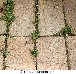 gras, grows, durch, der, straße, pflastern