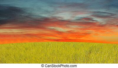 gras, hemel, rood