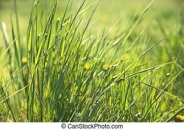 gras, in, frühlingswiese