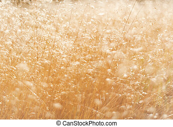 gras, in, zomer, abstract, achtergrond