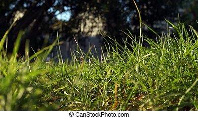 gras, lang, blazen, groene, uncut, sterke, wind