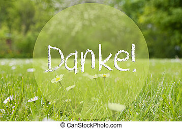 German Text Danke Means Thank You. Spring Or Summer Gras Meadow With Daisy Flower. Blurry Trees As Background.