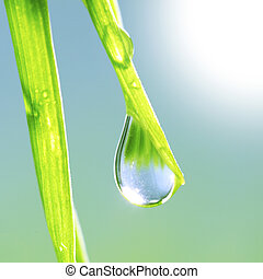 gras, met, dauw waterdruppel