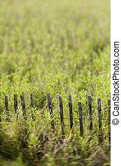 gras, met, fence.