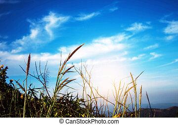 gras, mit, der, blauer himmel