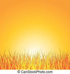gras, ondergaande zon