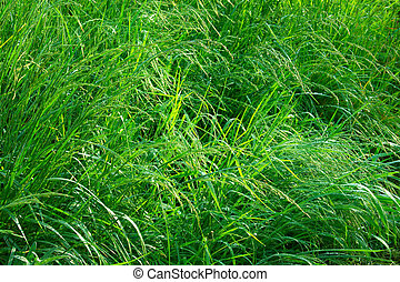 gras, onweer, na