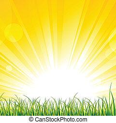 gras, op, de, zonneschijn, stralen