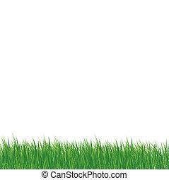 gras, op wit, achtergrond