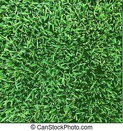 gras, textuur