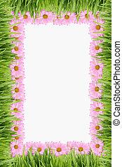 gras, und, gänseblumen, hintergrund