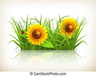 gras, vector, zonnebloemen