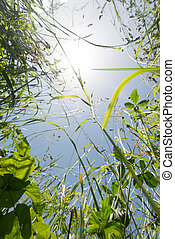 Gras von unten - grass from below with sun flares in the...