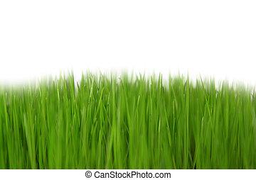 Gras, Wiese - freigestellt mit wei?em Hintergrund